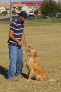 Joe Tomsich- Dog Trainer